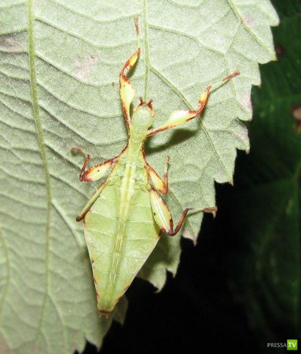 Самые большие насекомые планеты (47 фото)