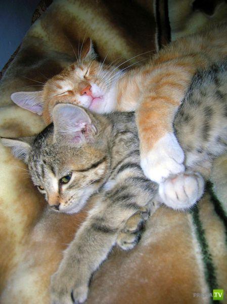 Мегапозитивный пост для любителей Кошек (78 фото)