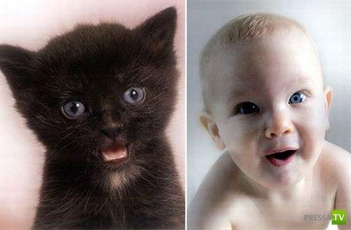 Как они похожи: Кошки и Дети (8 фото)