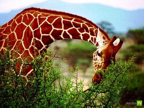 Самые необычные животные (15 фото)