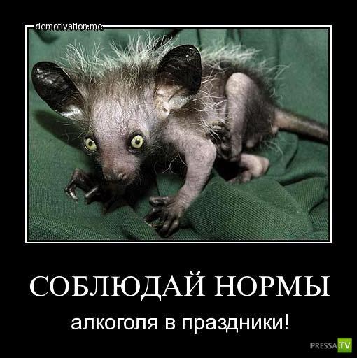 1325319945_demotivator-0011.jpg