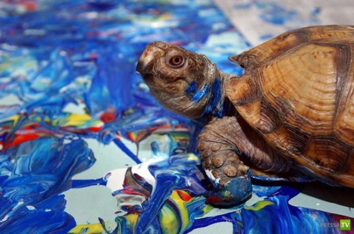 10 самых известных животных-художников