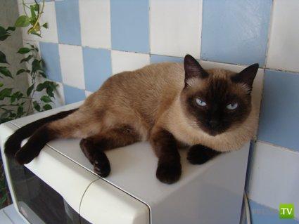 Устав настоящего котЭ ...