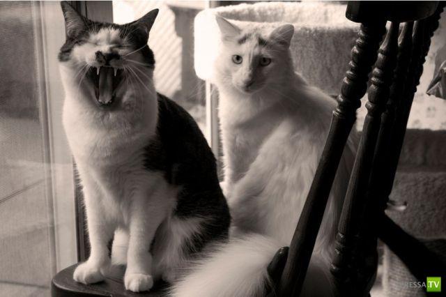 Эти забавные животные Часть 12 (35 фото)