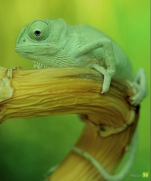 Причудливый и загадочный мир насекомых и маленьких животных