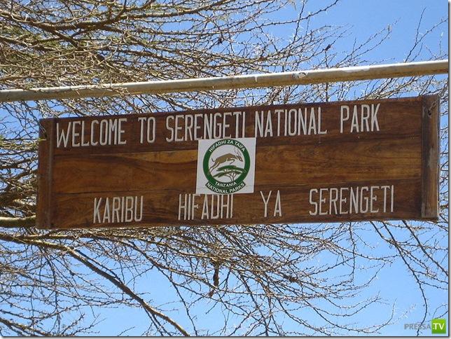 Заповедник - парк Серенгети (29 фото)
