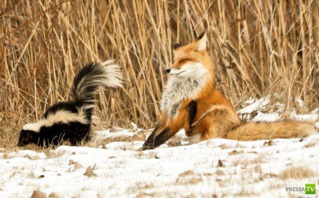 Эти забавные животные (37 фото)