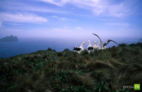 Как выглядят острова Баунти ? (7 фото)