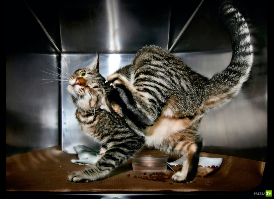 Брошенные животные (12 фото)