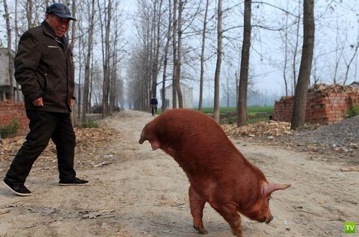 Только в Китае (25 фото)