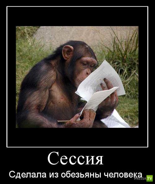 Русские студентки сдают сессию 13 фотография