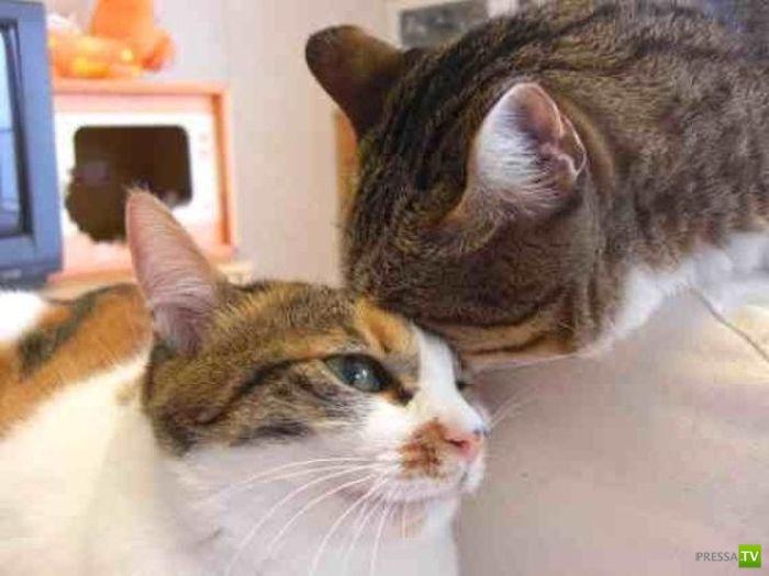 Влияние толстого кота ... (4 фото)