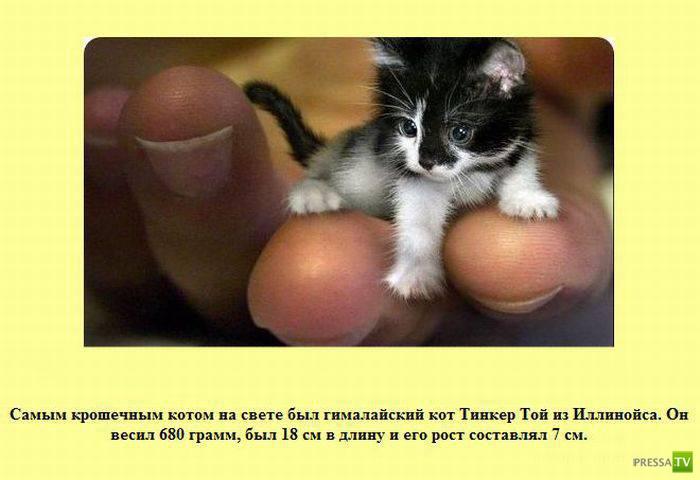 Интересные факты в картинках (45 фото)