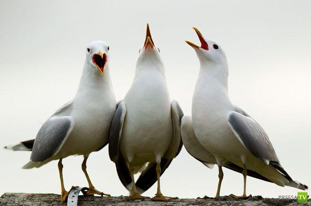 Эти забавные животные, часть 49 (33 фото)