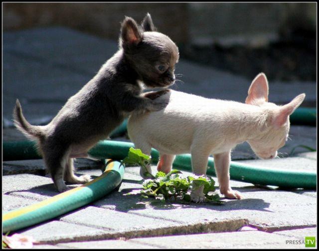 Эти забавные животные, часть 51 (34 фото)