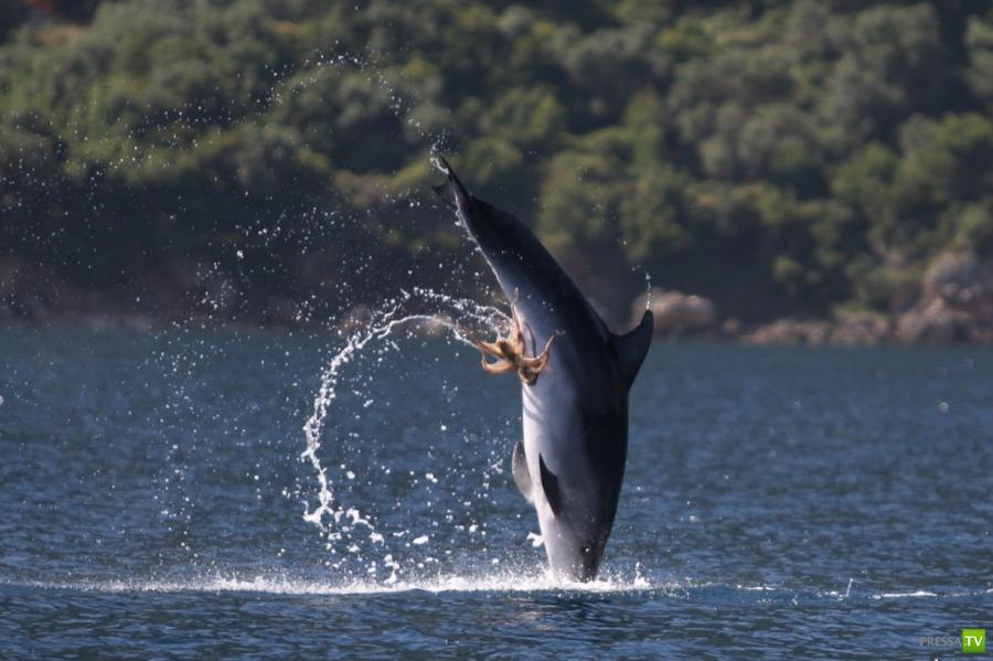 половые органы дельфинов фото