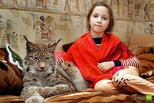 Калужская семья держит дома рысь (10 фото)