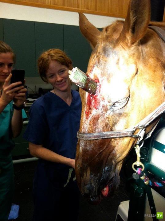 Лошадь ранили в голову (12 фото)