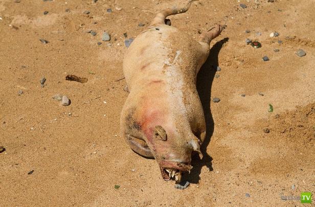 Неведомую зверюгу выбросило на берег Манхеттена
