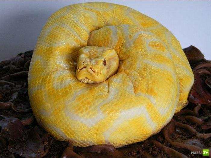 картинки торт из мастики змея питон