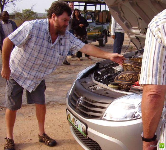 Жуткая находка под капотом авто (6 фото)