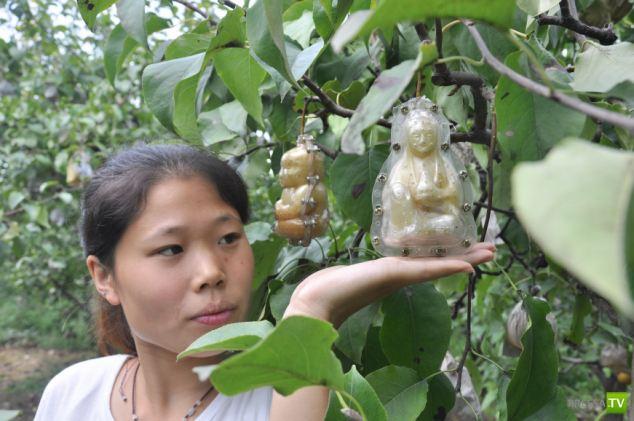как выращивают яблоки в китае актеров класс