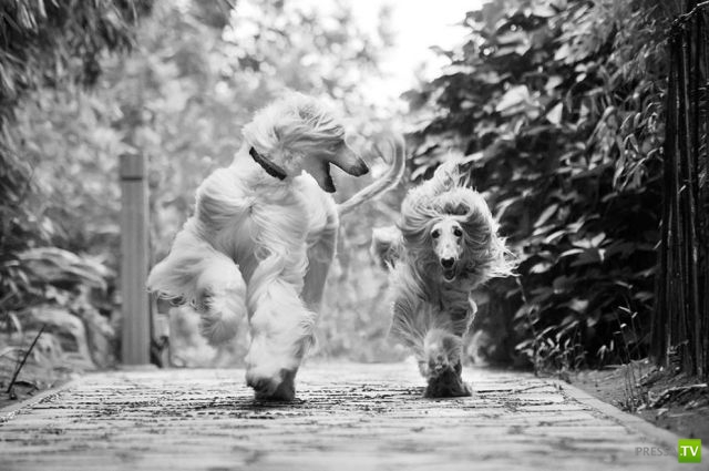Эти забавные животные, часть 103 (43 фото)