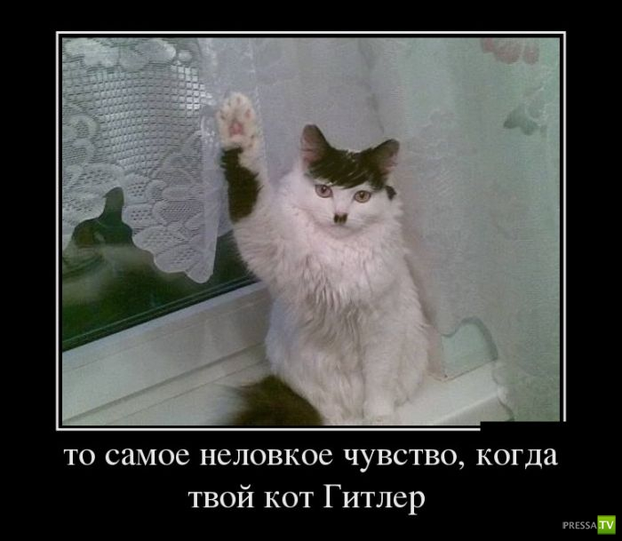 http://www.pressa.tv/uploads/posts/2012-10/1349826154_13.jpg