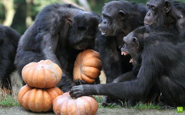 Забавные животные, октябрь 11 (44 фото)