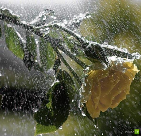 20 интересных фактов о дожде (8 фото)