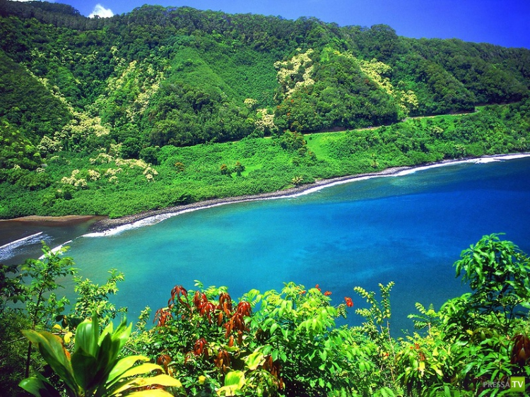 Великолепные  сады GARDEN OF EDEN ARBORETUM and BOTANICAL GARDEN острова Мауи (33 фото)