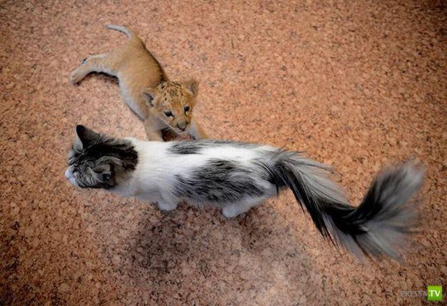Милые и забавные зверюшки, часть 5 (52 фото)