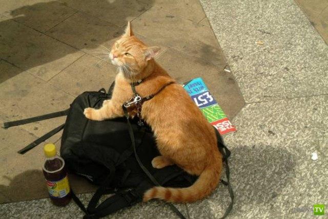 Книга про кота и музыканта стала бестселлером (10 фото)
