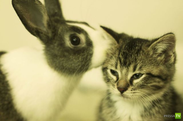 Милые и забавные зверюшки, часть 11 (44 фото)