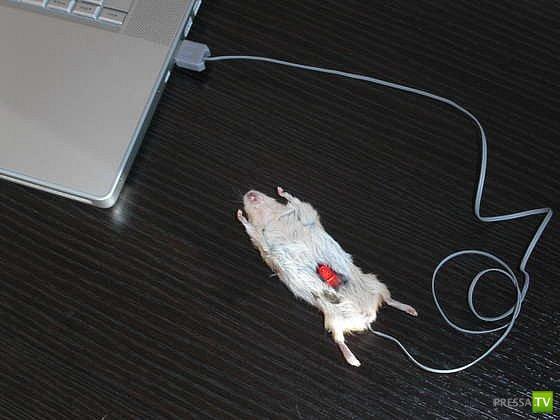 Компьютерной мыши своими руками фото