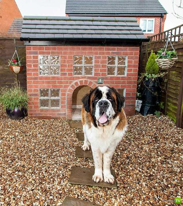 Конура за  $3000 для любимой собачки (8 фото)