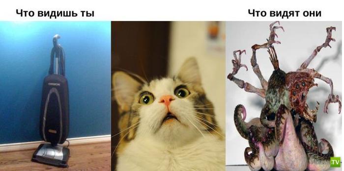 Мир глазами животных и человека (11 фото)