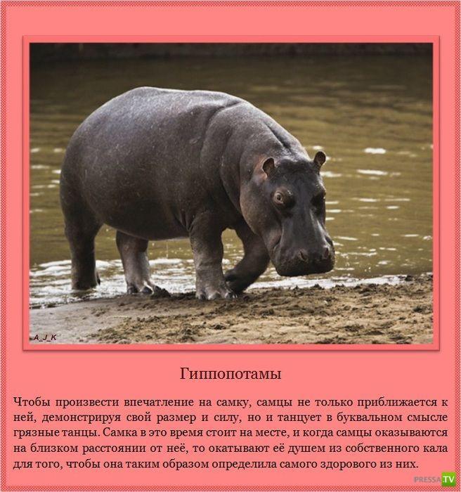 Сексуальность животных (12 фото)