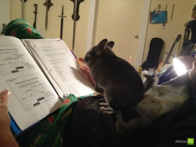Забавные животные, часть 3 (44 фото)