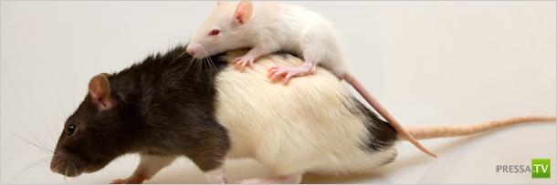 Животные способны на сильные чувства (5 фото)