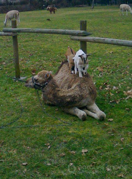 Забавные животные, часть 11 (45 фото)