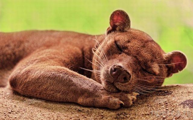 Утренний позитив - забавные животные, часть 1 (42 фото)