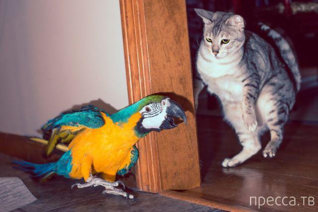 Забавные животные, часть 20 (50 фото)