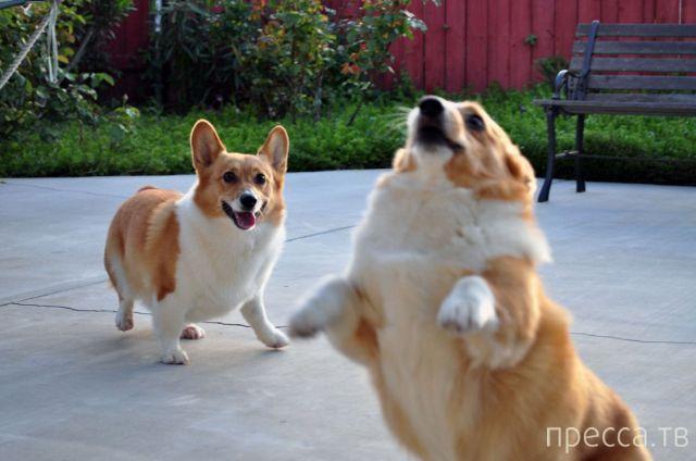 Заряд позитива - забавные животные, часть 7 (47 фото)