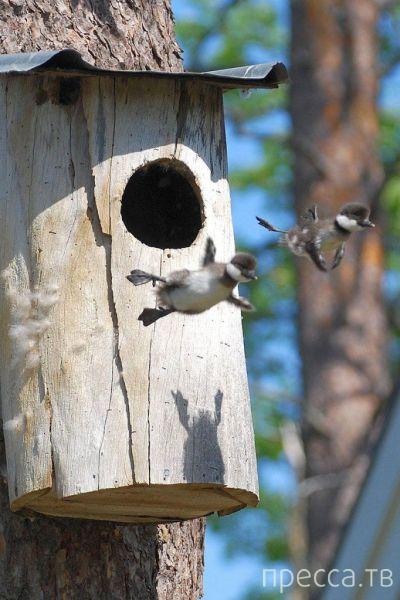 Заряд позитива - забавные животные, часть 9 (52 фото)