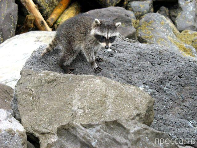 Заряд позитива - забавные животные, часть 12 (44 фото)