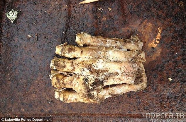 В США, в городке Lakeville, нашли ступню Снежного Человека (3 фото)