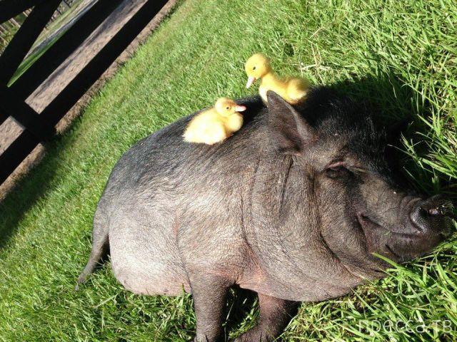 Заряд позитива - забавные животные, часть 21 (43 фото)