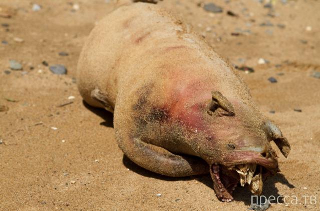 На побережье Новой Зеландии выбросило неизвестное морское чудовище (4 фото + видео)