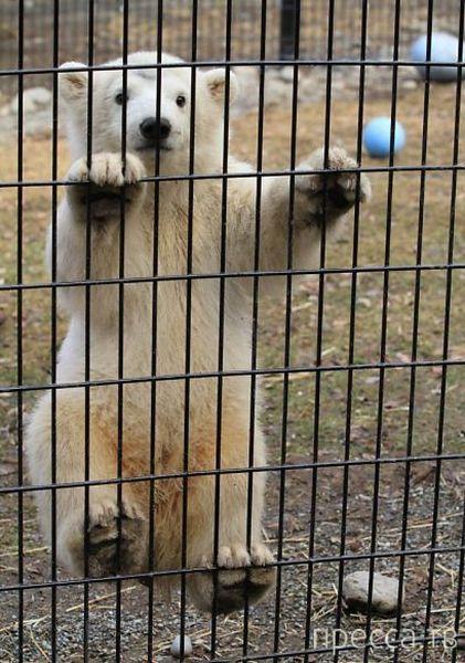 Заряд позитива - забавные животные, часть 30 (52 фото)
